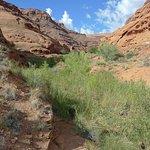صورة فوتوغرافية لـ Utah State Route 95