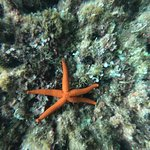 Star fish in Blue Cave Bay