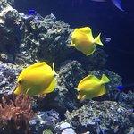 Photo of Atlantic City Aquarium Historic Gardner's Basin