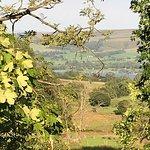 Landscape - Cove Park Picture