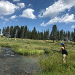 chasing brook trout