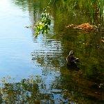 井の頭池は野鳥などがたくさんいます。