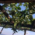 Dine Under the Lemon trees