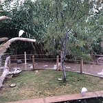 Bilde fra Alameda Park Zoo