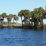 Photo of Tosohatchee State Reserve