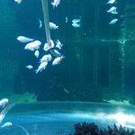 Valokuva: Blue Reef Aquarium Hastings