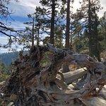 Foto de Tahoe Photographic Tours