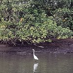 One of the waterbirds on the Tweed river