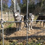 Foto de Wolf Sanctuary of PA