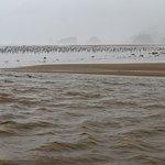 Birds in the rain on Cannon Beach