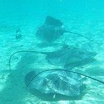 Foto de Lagoon Service Bora Bora