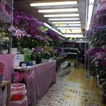 There is a story behind this market... get a guided tour from Airbnb Experiences or Hong Kong Fr