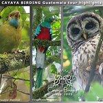 Blue-throated Motmot, Resplendent Quetzal, Fulvous Owl, seen during a CAYAYA BIRDING tour in 201
