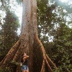 Photo of Amazon Rainforest