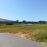 Yonder Hill Wine Estate Foto