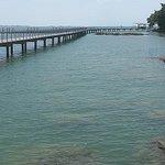 Sea grass lagoon pontoon floating, high tide Chek Jawa