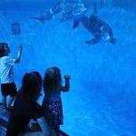 Underwater dolphin viewing