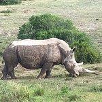 Foto de Shamwari Private Game Reserve