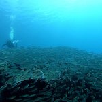 Photo of Buceo Norte