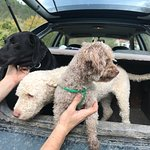 Valokuva: Truffle Hunting