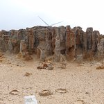 Foto de Petrified Forest and Blowholes