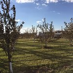 acres of beautifully groomed orchards