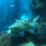 National Sea Life 2