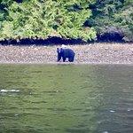 bear on shoreline during harbour tour