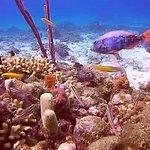 Sponge and Parrotfish