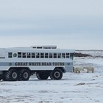 Foto van The Tundra Buggy Adventure - Day Tours