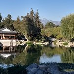 A view from the Chinese garden.