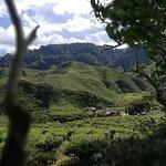 Photo of Cameron Bharat Tea Estate