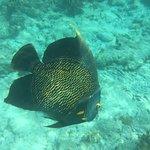 Tropical Divers의 사진