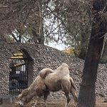 Фотография Алматинский зоопарк