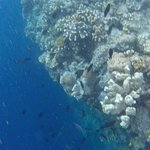 صورة فوتوغرافية لـ Bunaken National Marine Park