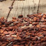 Photo of Cacao Trails Culture Tour