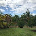 Punakea Palms