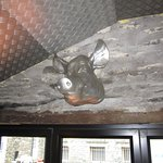The silver pig