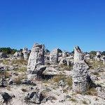 Zdjęcie Stone Forest