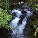 Bild från Rain Forest Nature Trail