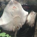 Bilde fra Bristol Aquarium