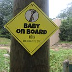 a baby on board sign I like