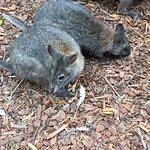 Foto van Featherdale Wildlife Park