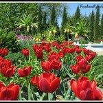 Tulips in Missouri Botanical Garden