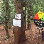 Bild från Karura Forest