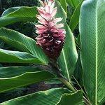 Φωτογραφία: Andromeda Botanic Gardens
