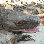 Top Komodo Tours Foto