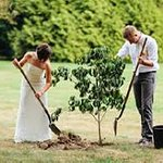 We offer tree planting for weddings and renewal of vow ceremonies as part of our eco experience