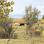 Photo of Nationalpark Neusiedler See – Seewinkel