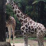 Photo of Indonesia Safari Park Cisarua